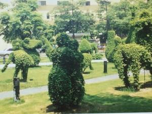 樹木剪出的物形「台北台安醫院庭園」