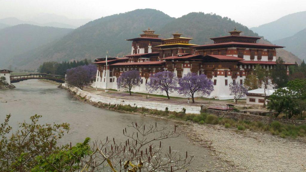 不丹第二大棕~普納卡棕